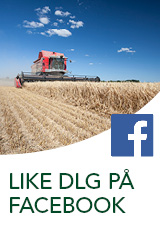 Like DLG på Facebook