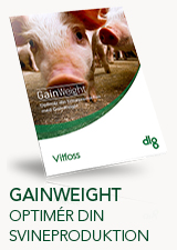 GainWeight - optimer din svineproduktion